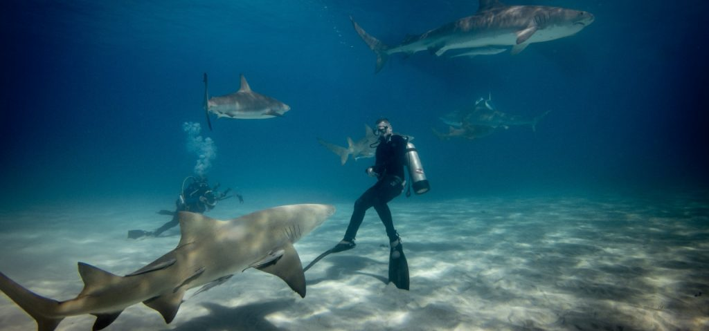 deep-sea diver surrounded by sharks
